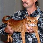 Выставка кошек, Днепропетровск