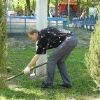 Высадка хвойных деревьев в Днепропетровске
